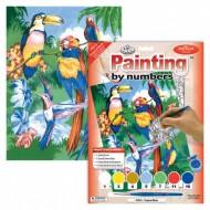 Painting by numbers Tropiska fåglar
